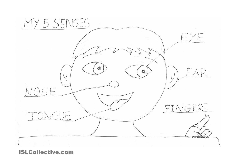 5 Senses Coloring Pages  Five Senses Senses Activities 5 Senses Activities
