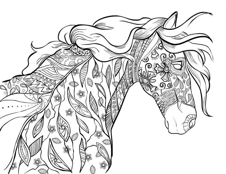 Adult Coloring Book Horse  The Amazing World of Horses Adult Coloring Book I Cindy