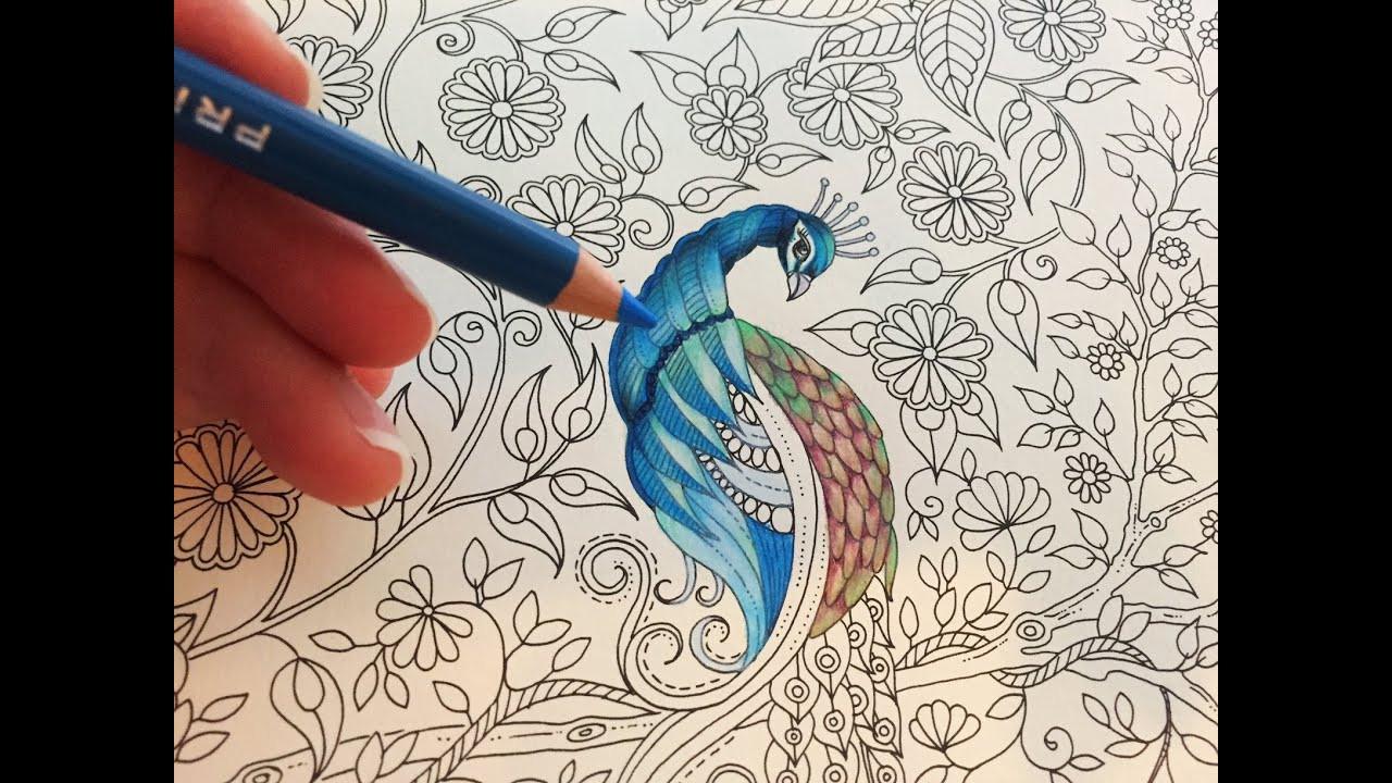 Adult Coloring Book Pencils  Peacock Part 1 3