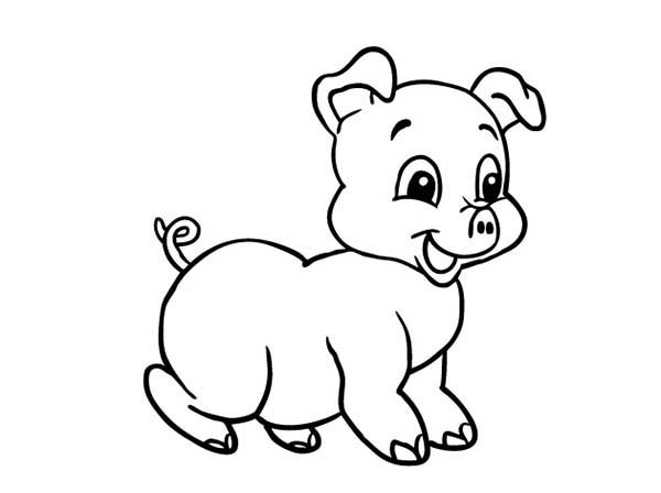 Baby Pig Coloring Pages  Baby Pig Laughing Coloring Page Baby Pig Laughing
