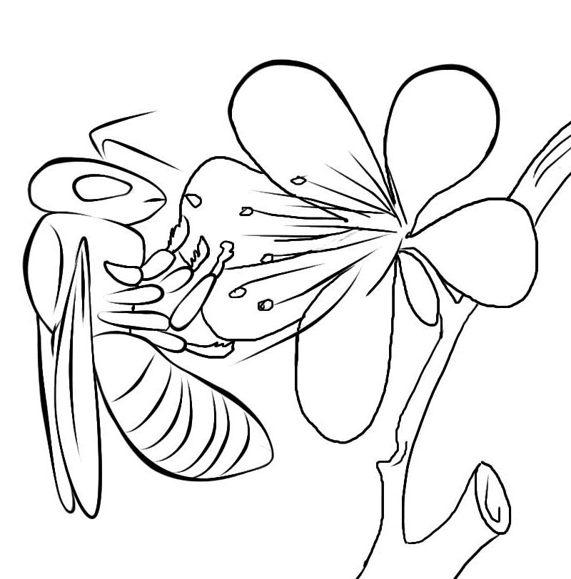 Best ideas about Bee Coloring Pages For Kids . Save or Pin Free Printable Bee Coloring Pages For Kids Now.