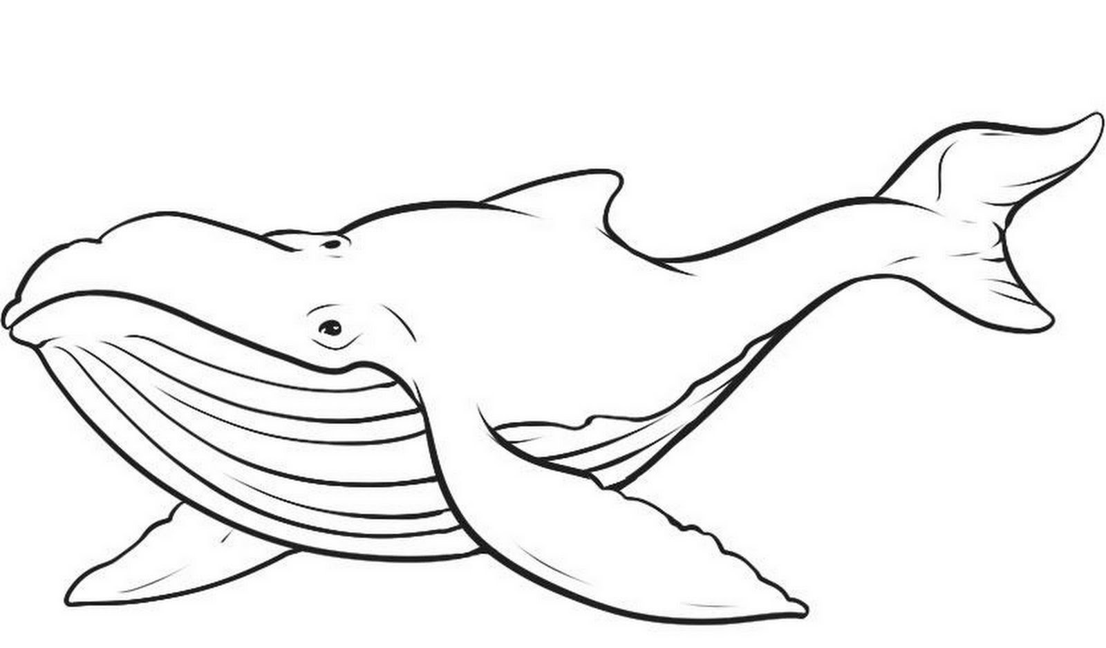 Blue Whale Coloring Pages  Free Printable Whale Coloring Pages For Kids