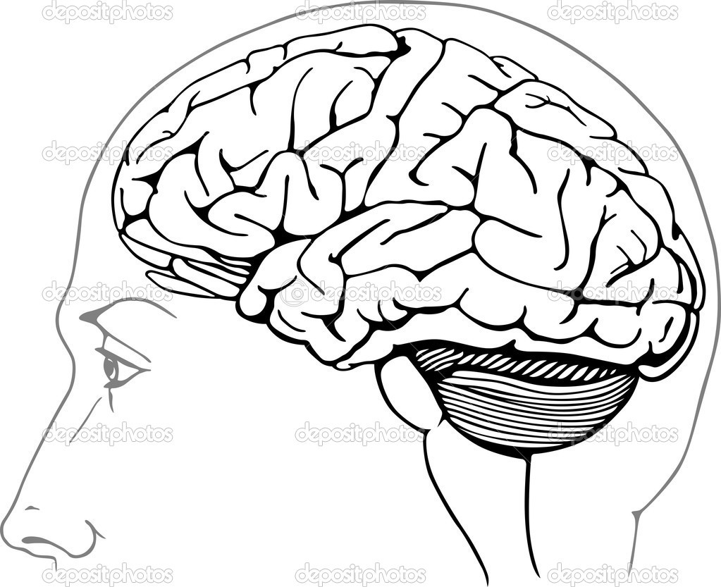 Brain Coloring Sheet  Human Brain With Brain Stem Free Coloring Pages