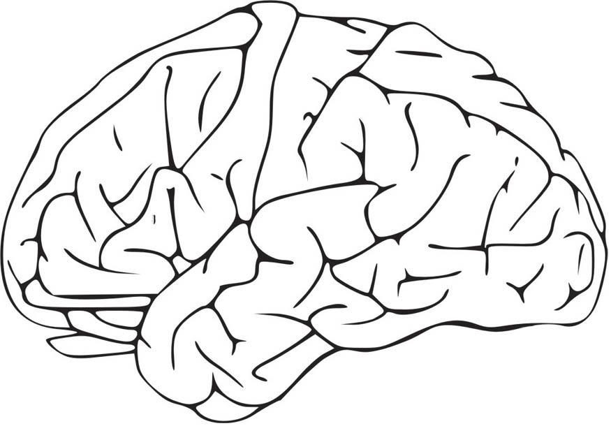 Brain Coloring Sheet  Human Brain Coloring Page Coloring Home