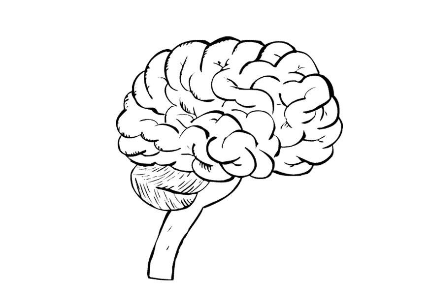 Brain Coloring Sheet  Human Brain Coloring Pages Coloring Home