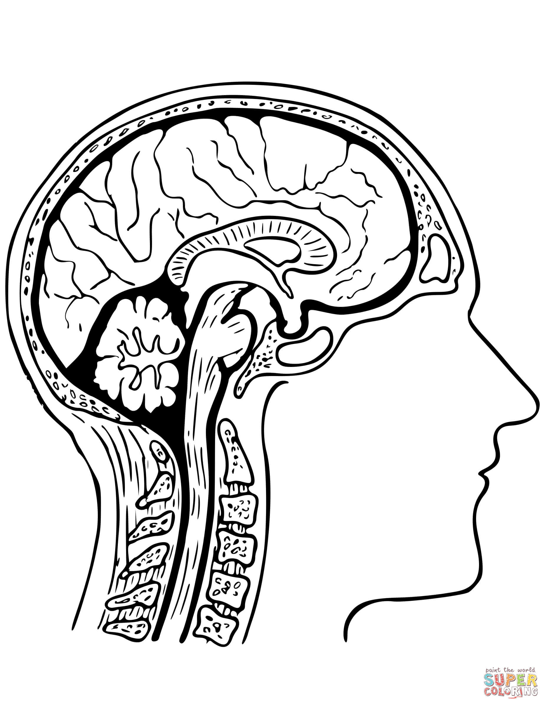 Brain Coloring Sheet  Dibujo de Cerebro Humano para colorear