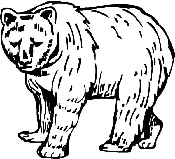 Brown Bear Brown Bear Coloring Pages  Sketch of Brown Bear Coloring Pages