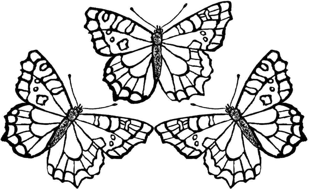 Butterfly Coloring Pages For Kids  In Butterfly Coloring Pages on with HD Resolution 1250x769
