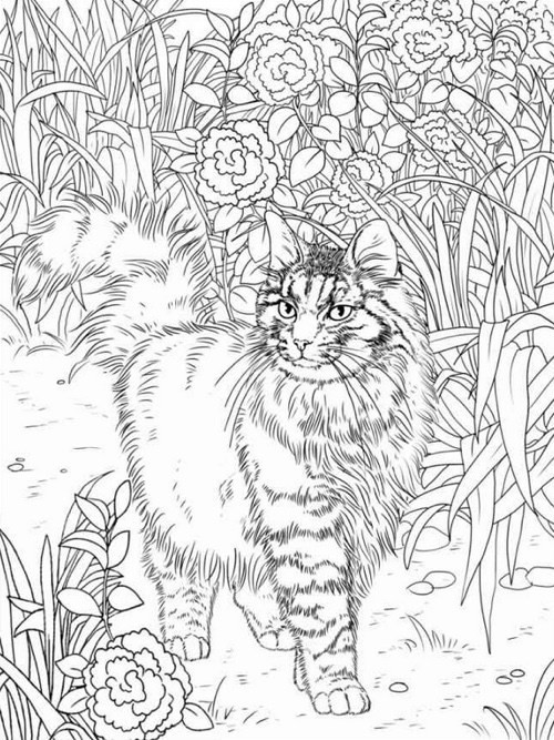 Cats Adult Coloring Book  Best Coloring Books for Cat Lovers Cleverpedia