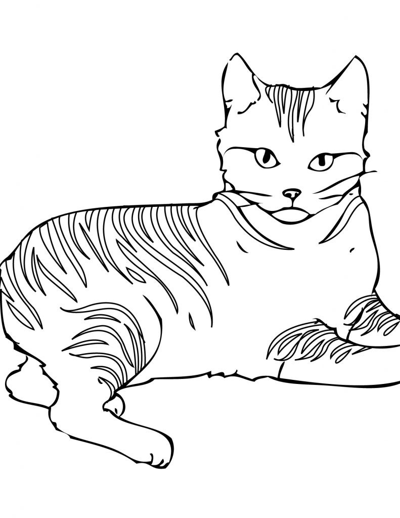 Cats Coloring Pages  Free Printable Cat Coloring Pages For Kids