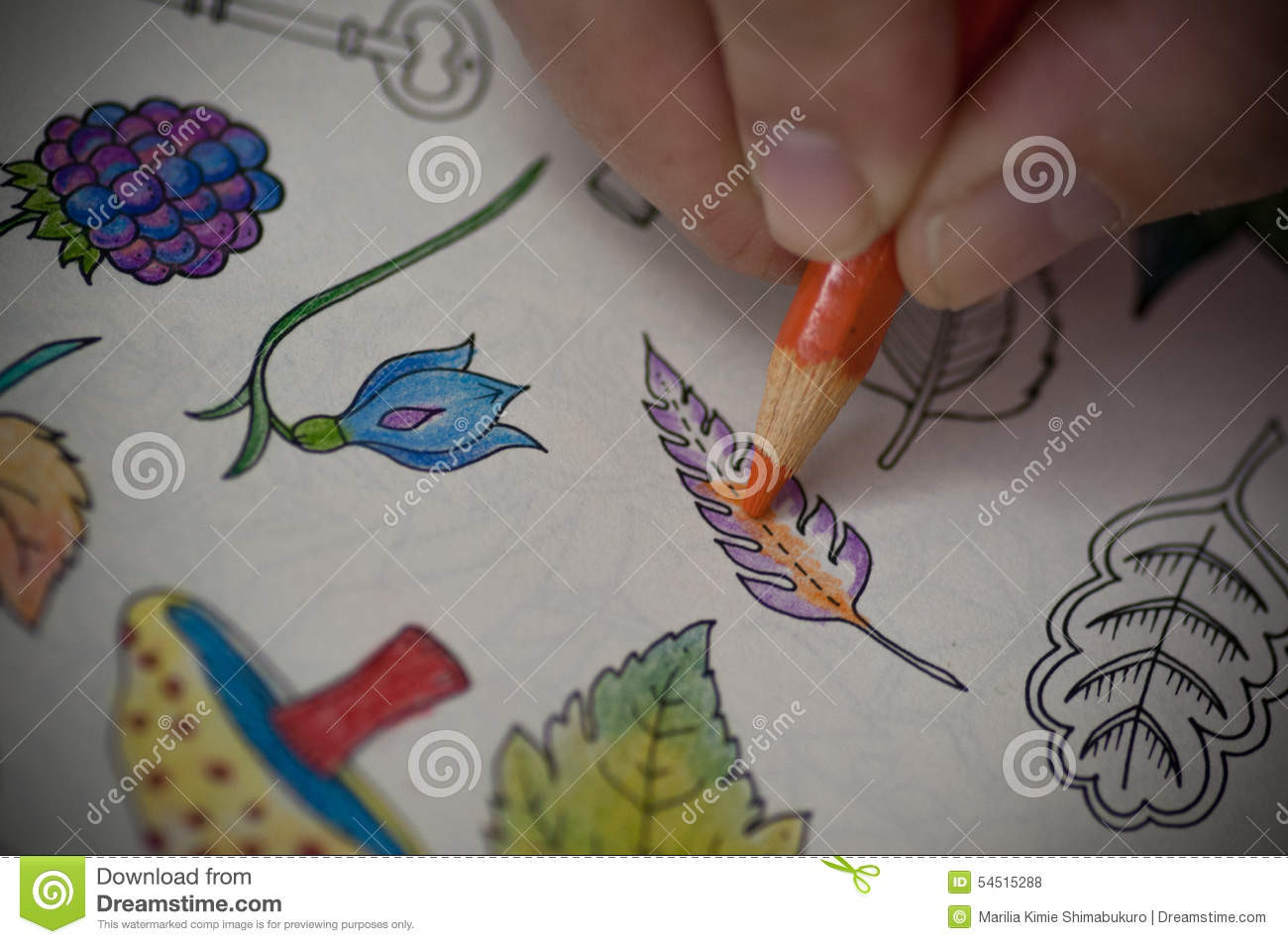 Colored Pencil Coloring Books  Coloring book stock photo Image of image book painting