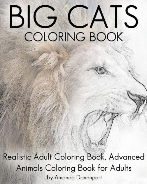 Coloring Book Barnes And Noble  Big Cats Coloring Book Realistic Adult Coloring Book