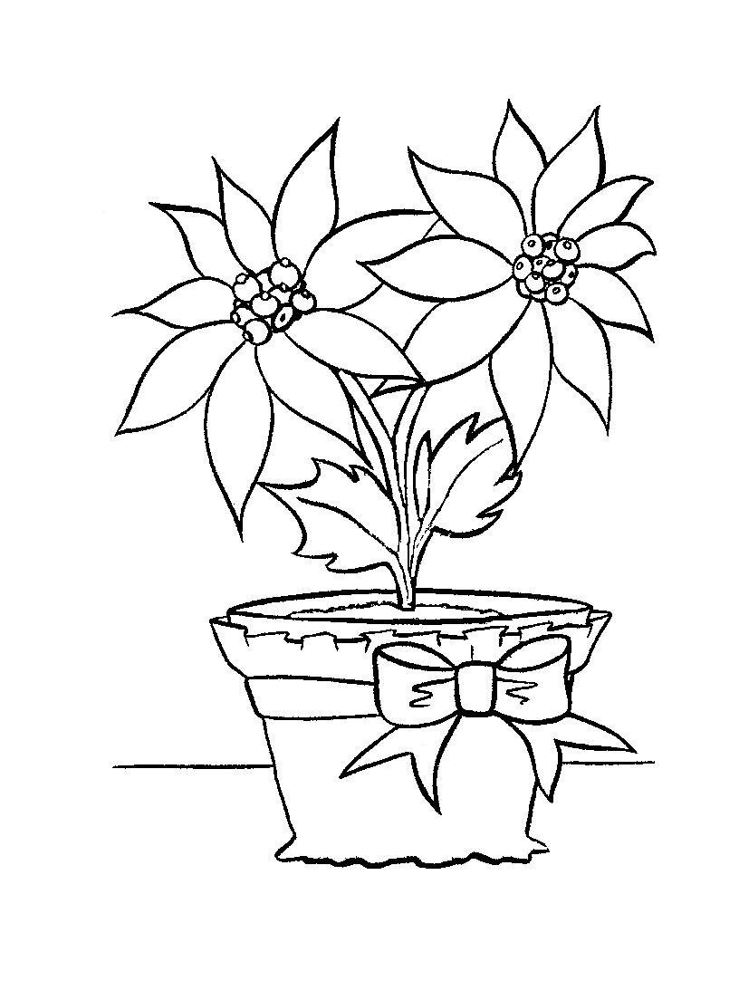 Coloring Book Pages Online Free  Free Printable Poinsettia Coloring Pages For Kids