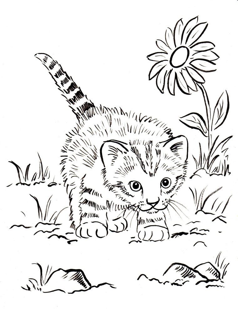 Coloring Pages Cat  Kitten Coloring Pages Best Coloring Pages For Kids
