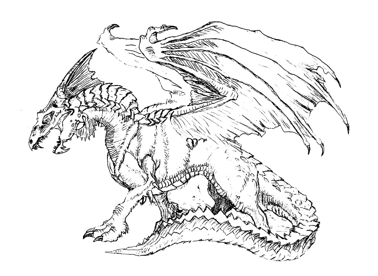 Coloring Pages For Adults Dragon  Scary dragon Dragons Adult Coloring Pages