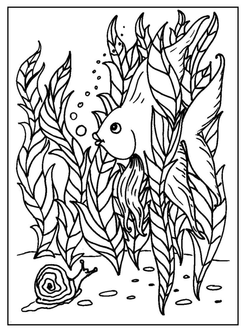 Coloring Pages For Girls Intermidiet  Funny Fish Coloring Pages – S Mac s Place to Be