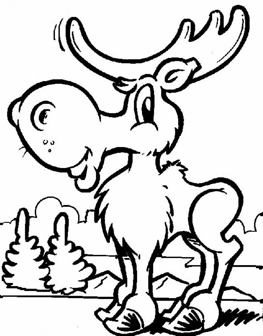 Coloring Pages For Kides  Free Printable Moose Coloring Pages For Kids