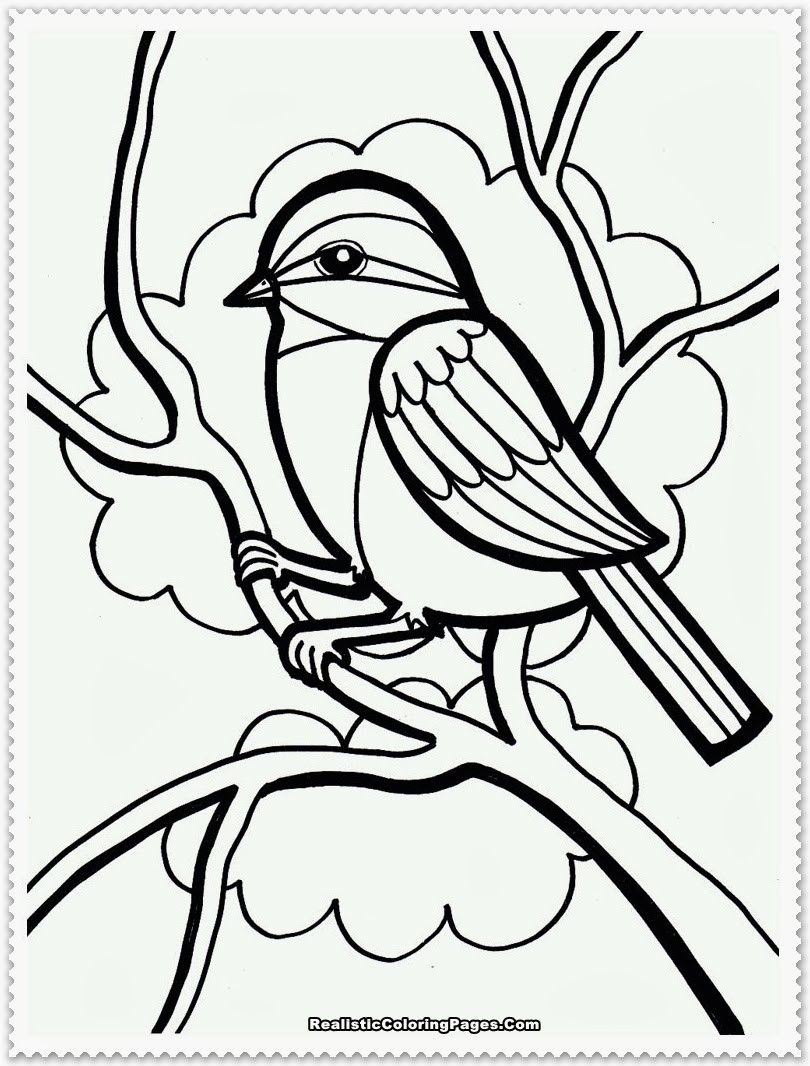 Coloring Pages For Kids Birds  Bird Coloring Pages Realistic