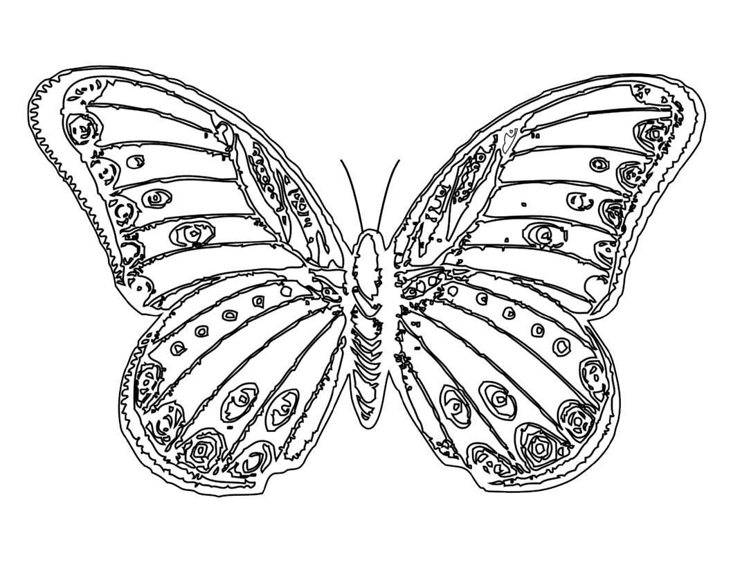 Coloring Pages For Kids Butterflies  Free Printable Butterfly Coloring Pages For Kids