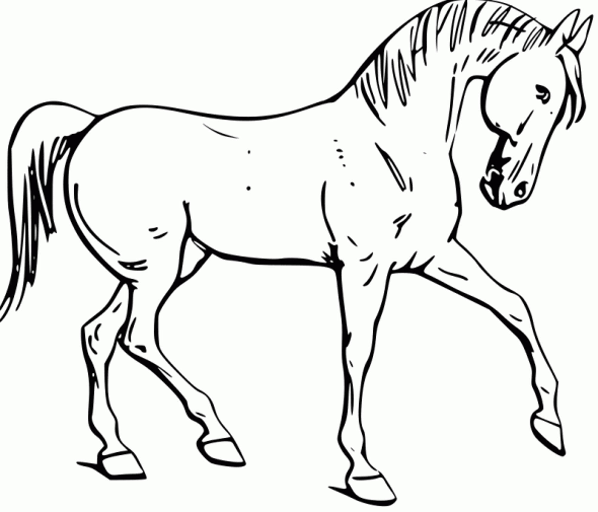 Coloring Pages For Kids Horse  Fun Horse Coloring Pages for Your Kids Printable