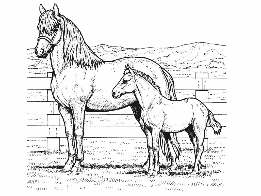 Coloring Pages For Kids Horse  Children are fascinated by colors Some instances are