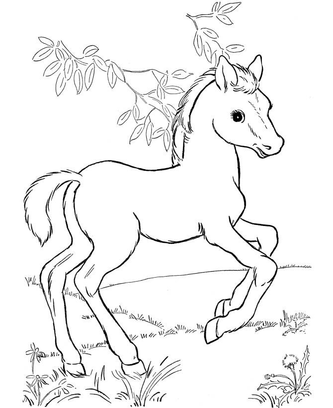 Coloring Pages For Kids Horse  Free Printable Horse Coloring Pages For Kids