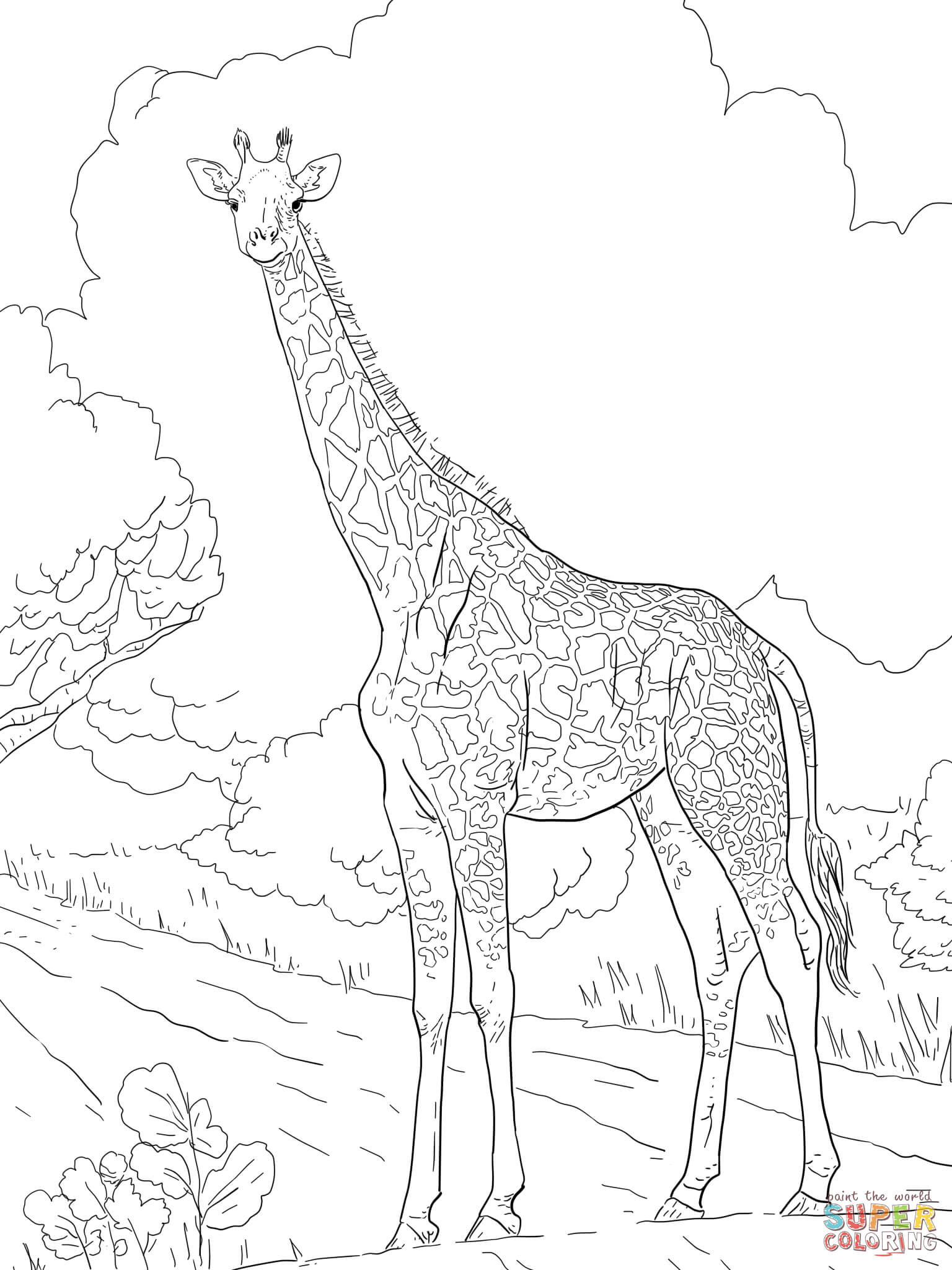 Coloring Pages Giraffe  Female Masai Giraffe coloring page