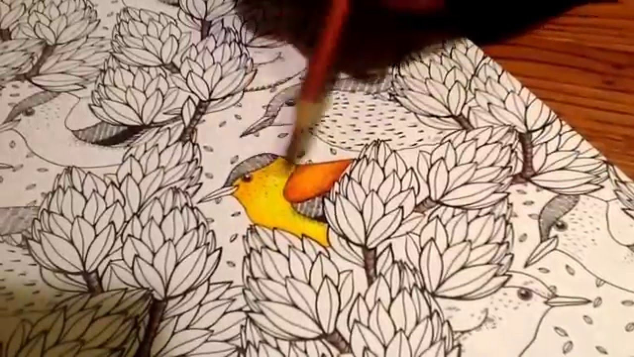 Coloring Pencils For Adult Coloring Books  How to use colored pencils on adult coloring books