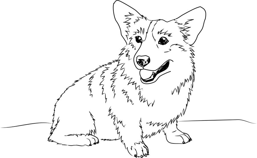Corgi Coloring Pages  Welsh Corgi Sketch by shango266 on DeviantArt