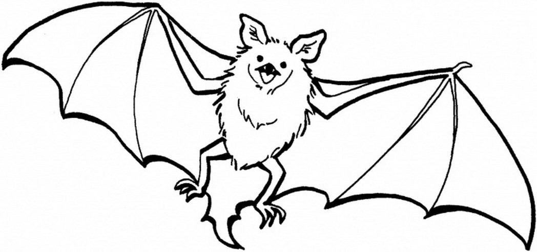 Cute Bat Coloring Pages  cute bat coloring page super Coloring Pages for