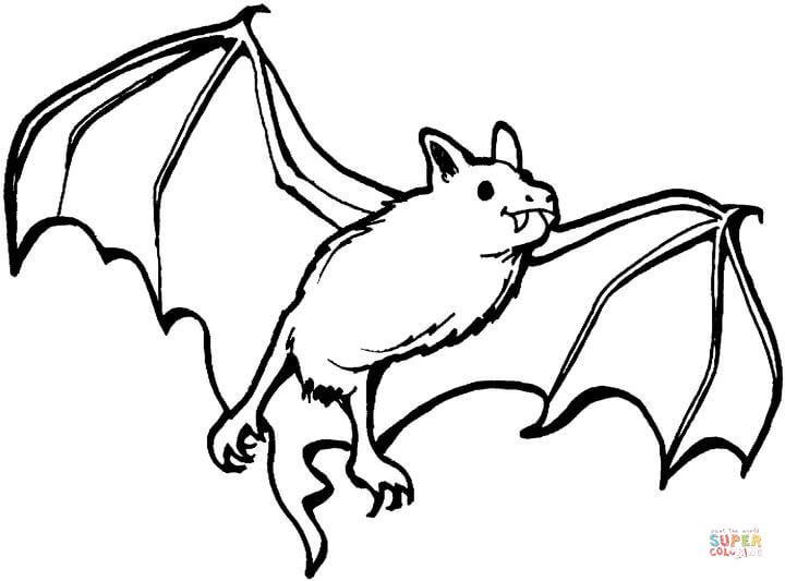 Cute Bat Coloring Pages  Bat clipart coloring book Pencil and in color bat