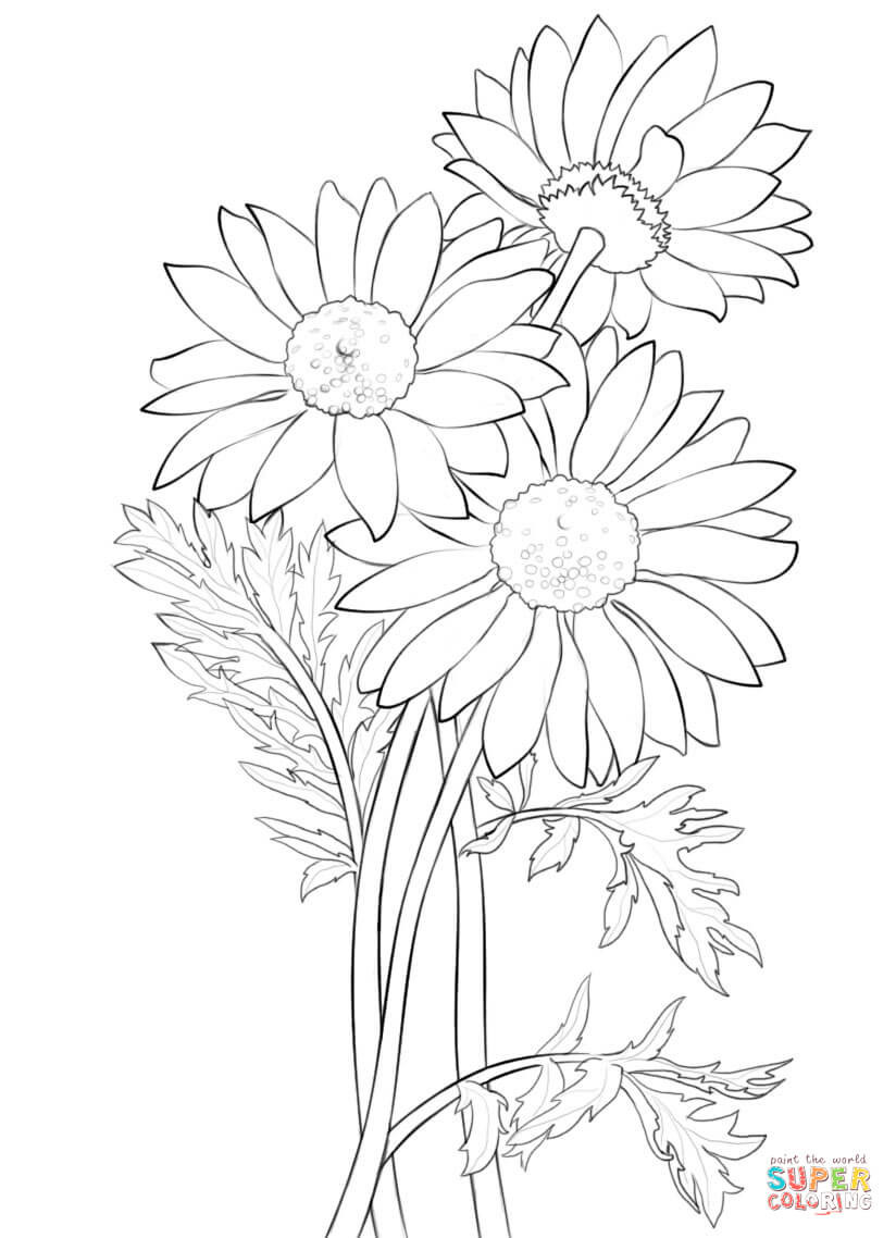 Daisy Coloring Pages  Daisy coloring page