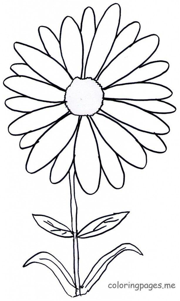 Daisy Coloring Pages  Daisy Free Colouring Pages