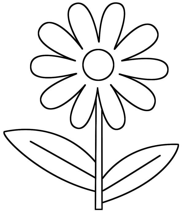 Daisy Coloring Pages  Daisy Flower D is for Daisy Flower Coloring Page