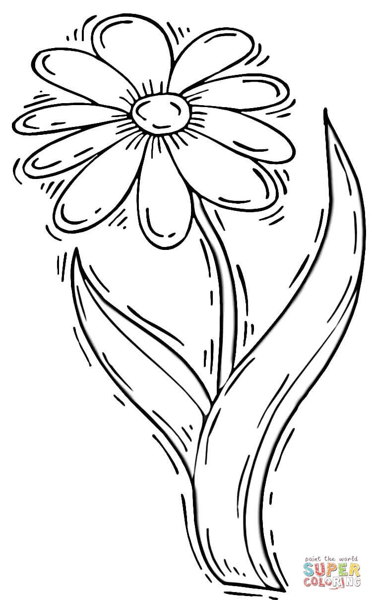 Daisy Coloring Pages  Daisy Flower coloring page