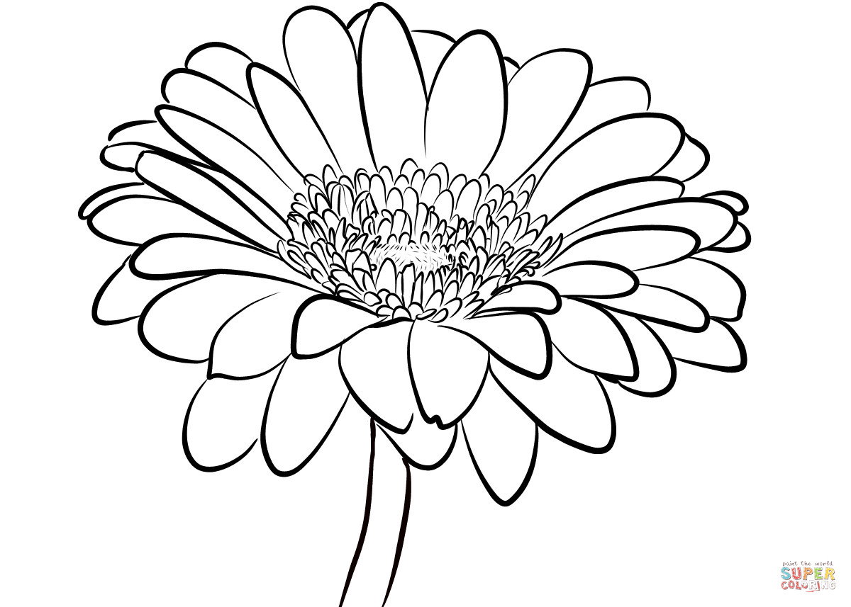 Daisy Coloring Pages  Gerbera Daisy coloring page