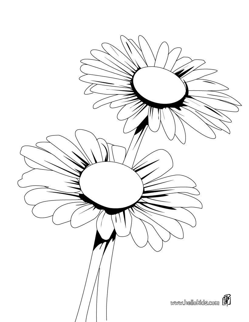 Daisy Coloring Pages  Daisy bunch coloring pages Hellokids