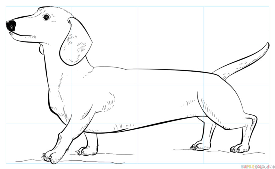 Daschund Coloring Book  How to draw a Dachshund