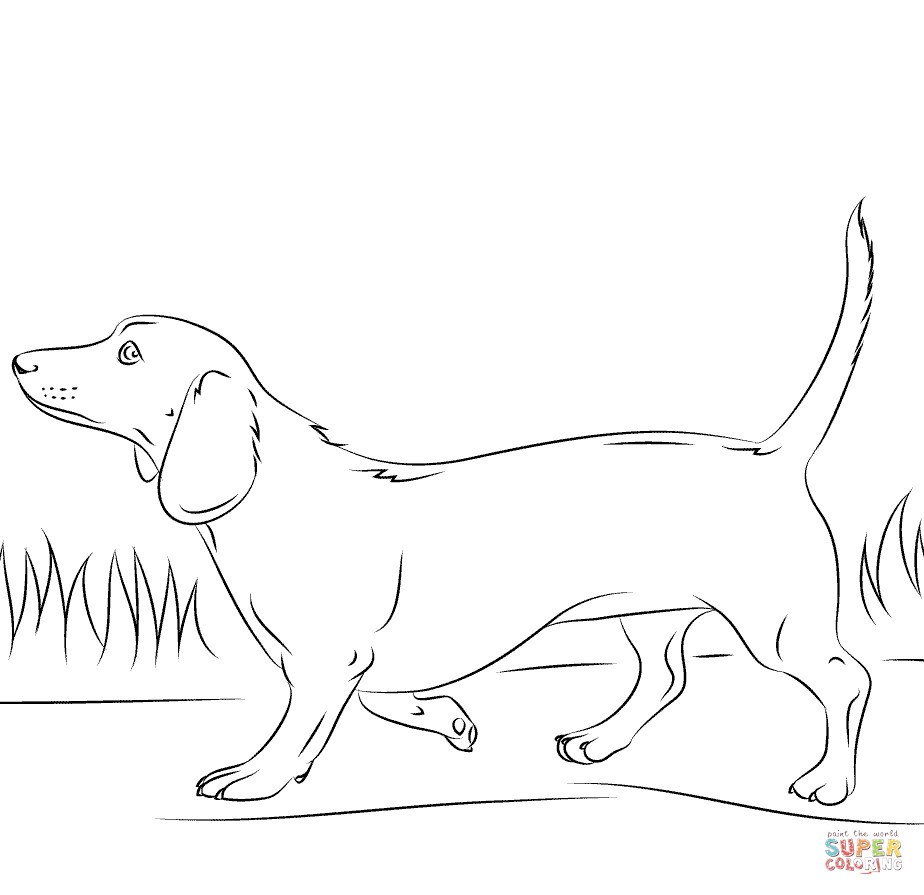 Daschund Coloring Book  Dachshund dog coloring page