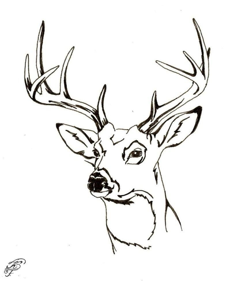 Deer Head Coloring Pages  Buck And Doe Coloring Pages Coloring Home