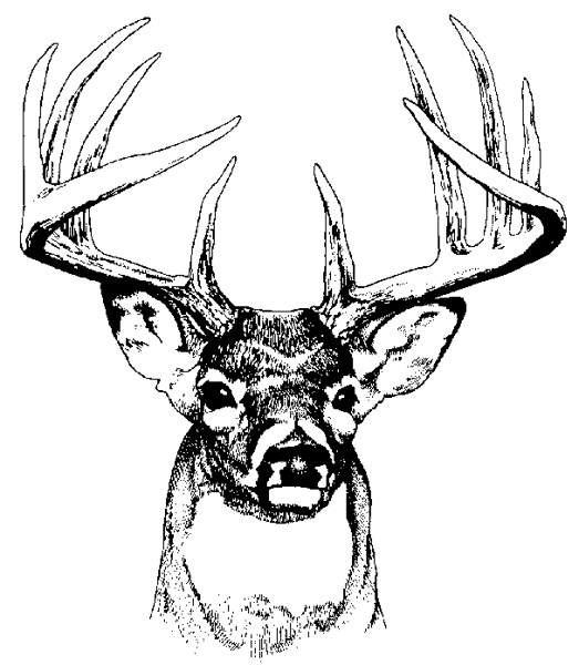 Deer Head Coloring Pages  Deer Head Art ClipArt Best
