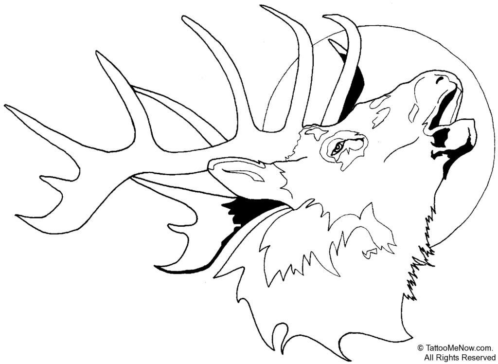 Deer Head Coloring Pages  Deer Skull Pages Coloring Pages