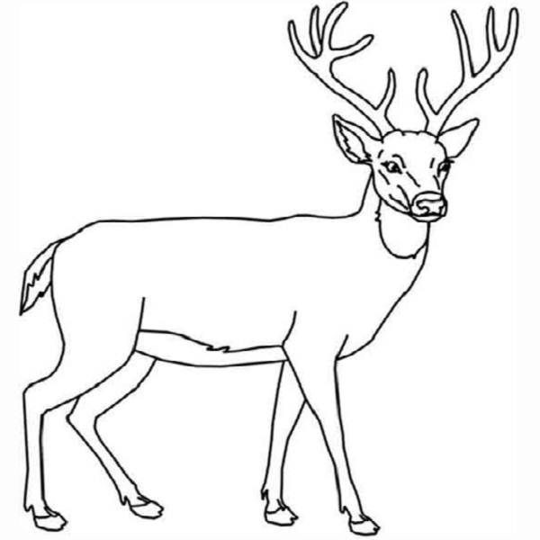 Deer Head Coloring Pages  Deer Head Coloring Pages Coloring Pages