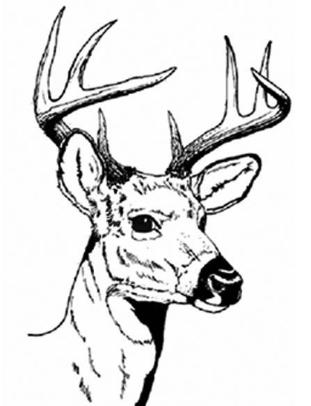 Deer Head Coloring Pages  Deer Head Line Drawing ClipArt Best