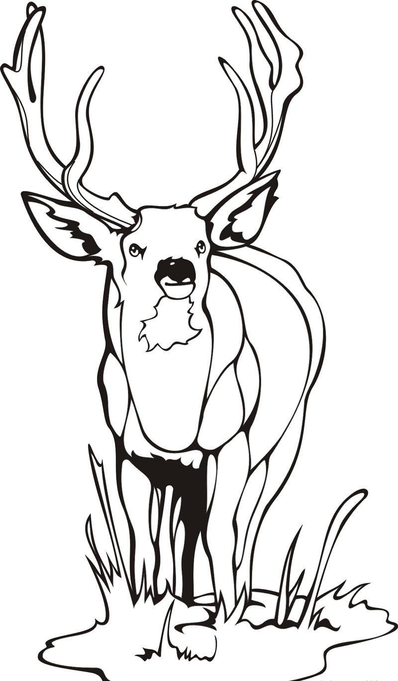 Deer Head Coloring Pages  Whitetail Deer Coloring Pages Bestofcoloring