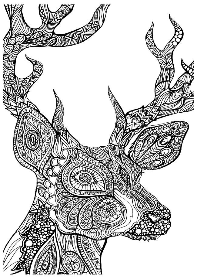 Deer Head Coloring Pages  Adult coloring pages deer head ColoringStar