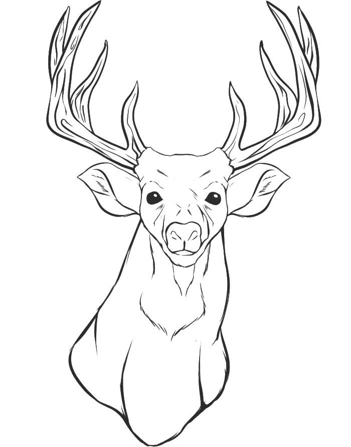 Deer Head Coloring Pages  Deer Coloring Page Coloring Home