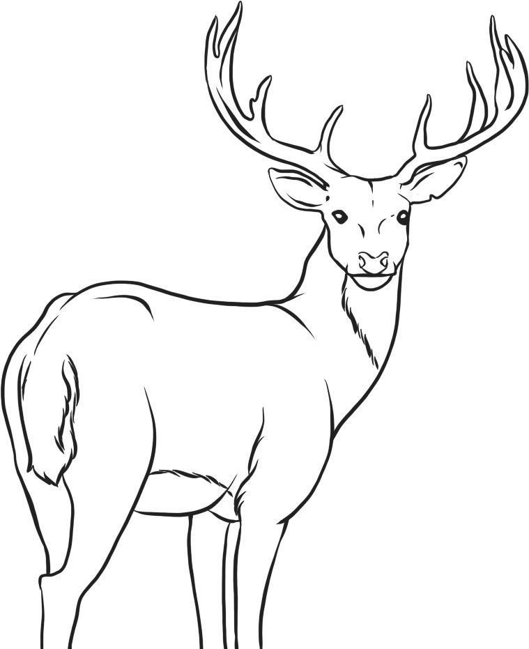 Deer Head Coloring Pages  Free Printable Deer Coloring Pages For Kids