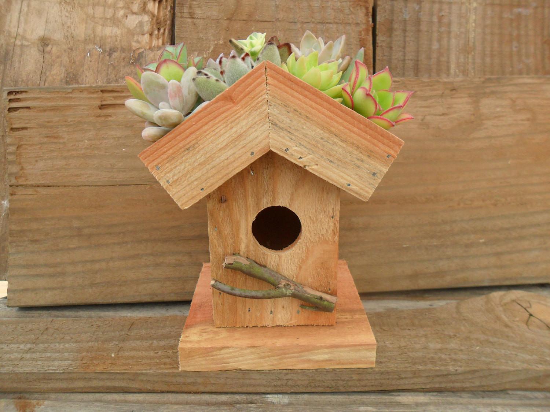 DIY Birdhouse Kit  Living Roof Birdhouse Succulent Planter DIY Kit Succulent