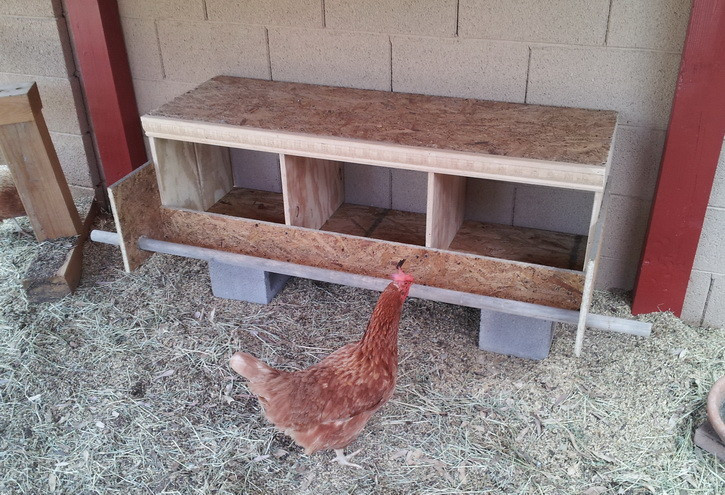 Best ideas about DIY Chicken Nesting Boxes . Save or Pin How To Build a Chicken Nesting Box Now.
